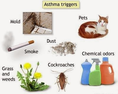 Asthma Causes, Prevention and Environmental Triggers