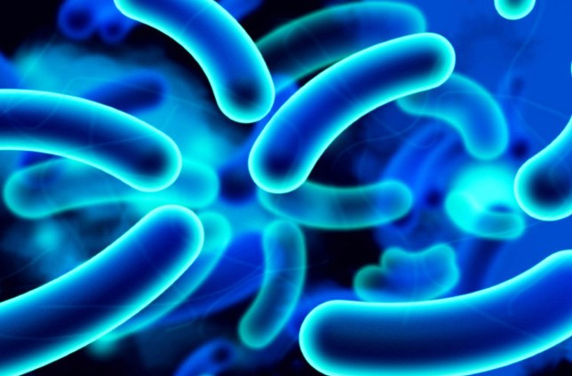 ESBL E.Coli UTI infection in urine: Treatment and Prevention
