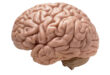 Gliosis Meaning, Definition, Symptoms, Causes, Treatment