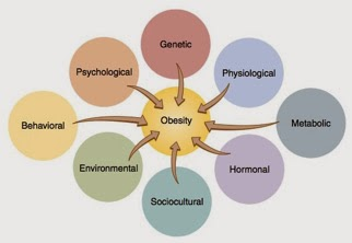 Causes of Obesity and Fatness