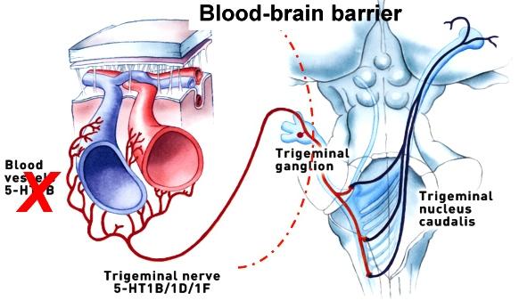 Migraine Mechanism