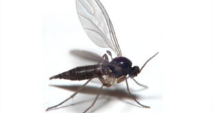 How to get rid of Gnats in Kitchen, House, Bathroom
