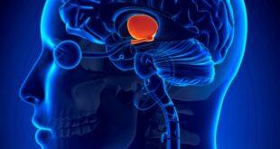Encephalomalacia - Causes, Symptoms, Diagnosis, Treatment